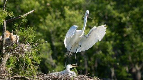 A Different Perspective, Egret