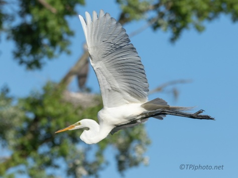 Leap Into Space, Egret