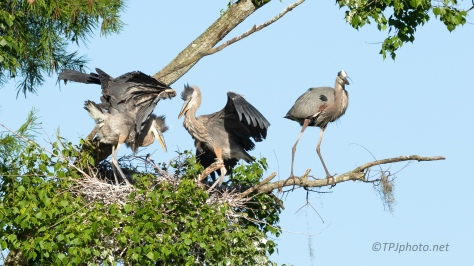 She Can't Wait For Them To Move Out, Heron