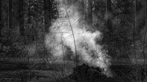 Burning Woodlands / Marsh