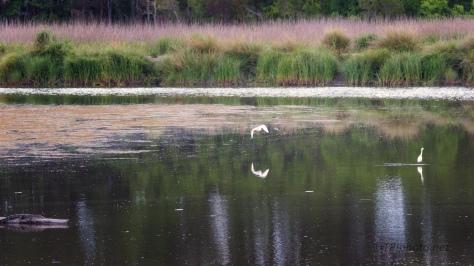 Marsh Scene