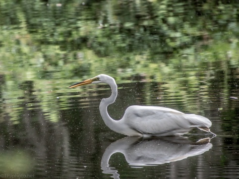 Pond Reflections, Pollen, And An Egret