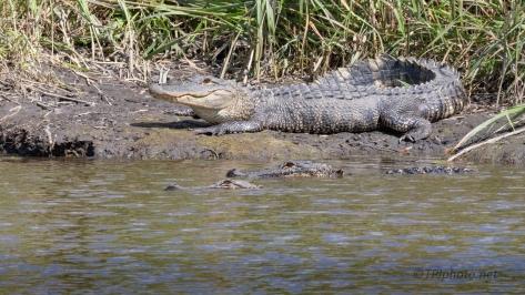 Alligator Highway