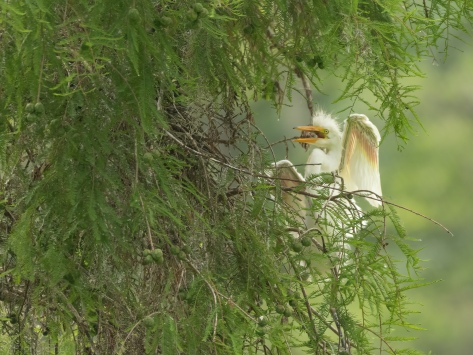 Not The Best Place To Climb, Egret