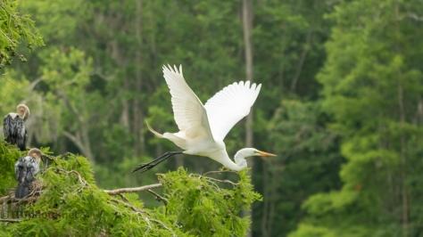 A Short Trip, Egret