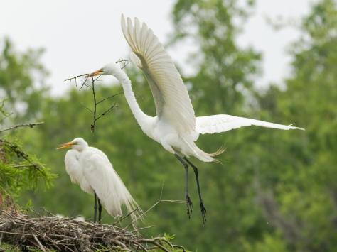 A Quick Fix, Egret