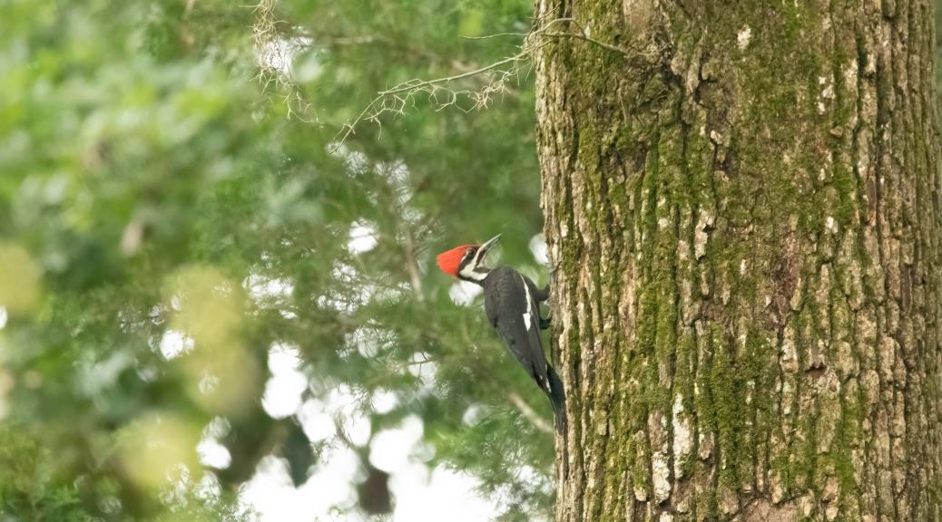 Almost Hit My Head, Woodpecker