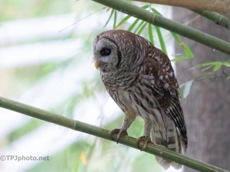 He Was Kind To Me, Owl