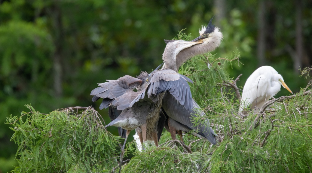 It's Not Easy At Meal Time, Heron
