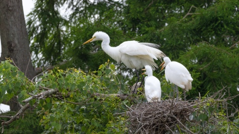 Behaving Well, Egret