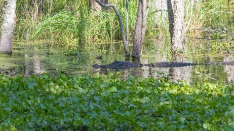 New Swamp, Same Locals