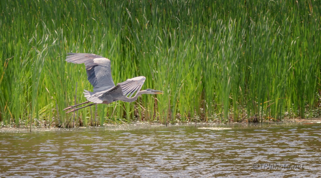 Fast From The Dike, Heron