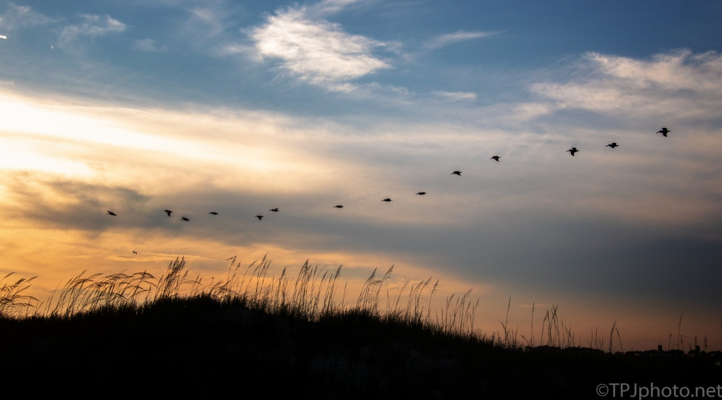 Sunset And Pelicans, Charleston Beach