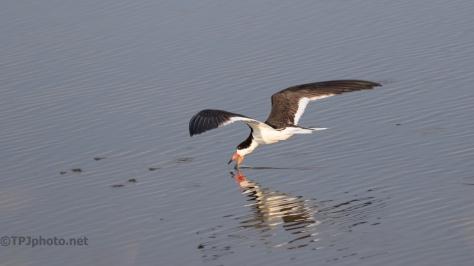 A Skimmer Skimming