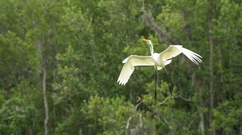 Egret Returns