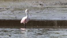 Watching Pink
