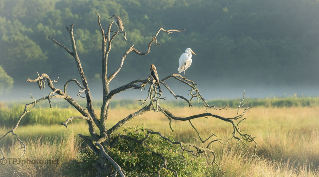 A Marsh Morning