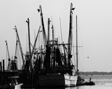 Three Views, Charleston Shore