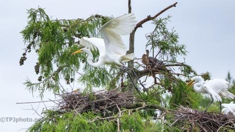 Egret Action