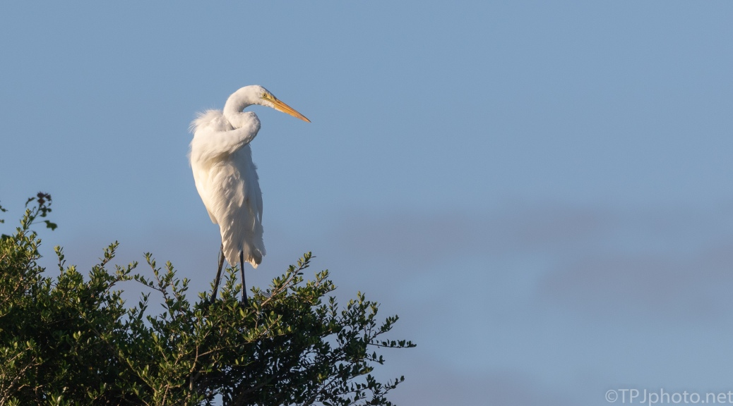 Up On Top, Egret
