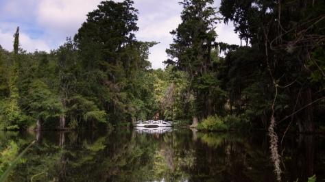 Swamp Pond