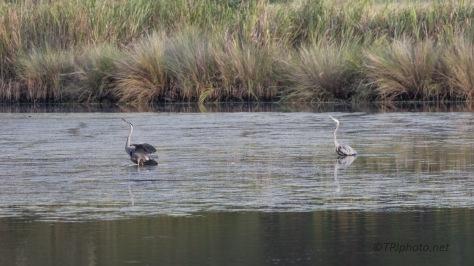 Marsh Scenes