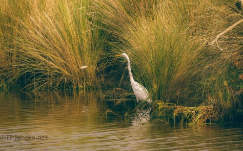 An Egrets Secret Spot