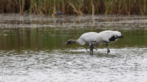 A Feeding (2), Stragglers