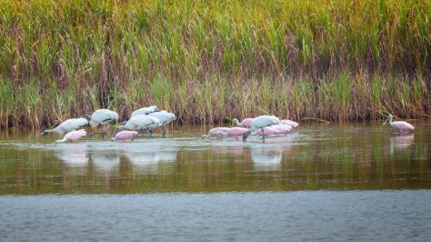 My Timing Was Good, Spoonbill