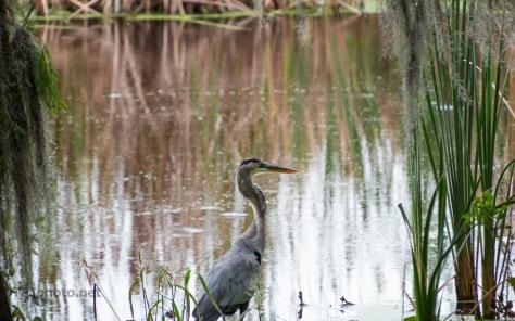 Near The Ashley, Heron