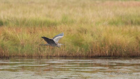 Across The Water, Great Blue