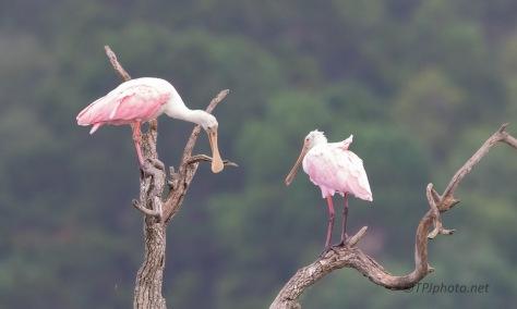Pink Birds