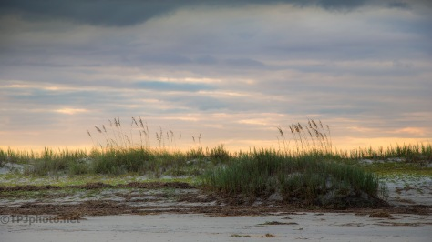 Sundown Marsh Grass
