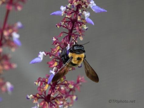 Working Hard, Bee