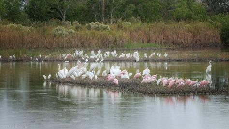 A Marsh Gathering