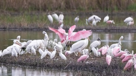 Crashing The Party, Spoonbill