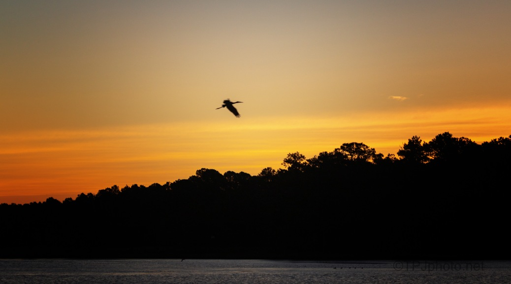 Early Wood Stork