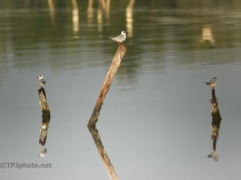A Few Reflections