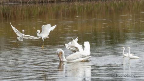 Follow The Pelican