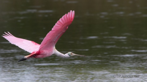 Close And Fast, Spoonbill