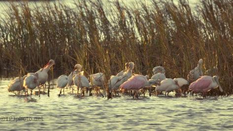 Marsh Morning Scenes