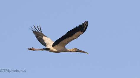 Storks Over Head