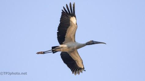 Storks Over Head