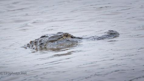 Move But No Motion, Alligator