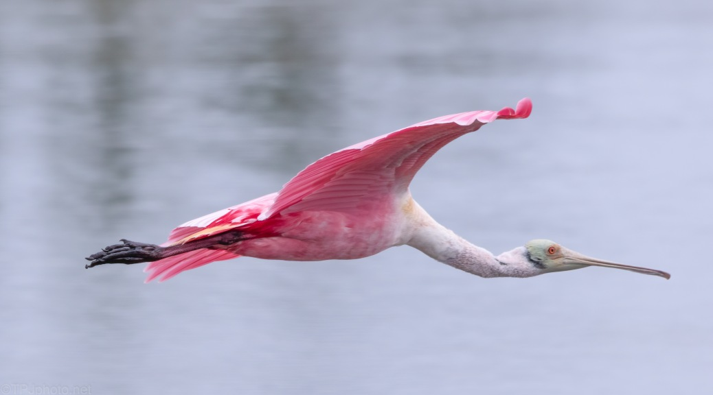 Close Encounter, Pink Style