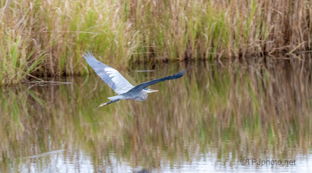 Heron In A Pretty Marsh Scene