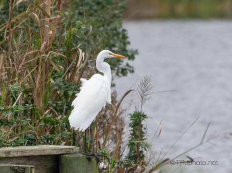Best Spot In The Marsh
